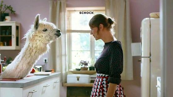 ALPACA - A SCHOCK reklámkampányának sztárja